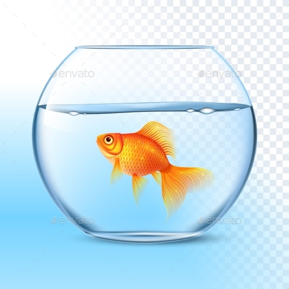 Goldfish in Water Bowl - Animals Characters