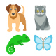 Animals Pets Vector Flat Colorful Icons Set - GraphicRiver Item for Sale