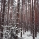 Aerial View: Winter Coniferous Forest: Spruce And Pine - VideoHive Item for Sale
