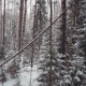 Aerial Photo Forest With Fallen Trees In Winter - VideoHive Item for Sale