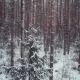 Mixed Forest: Pine, Spruce, Birch In Winter - VideoHive Item for Sale
