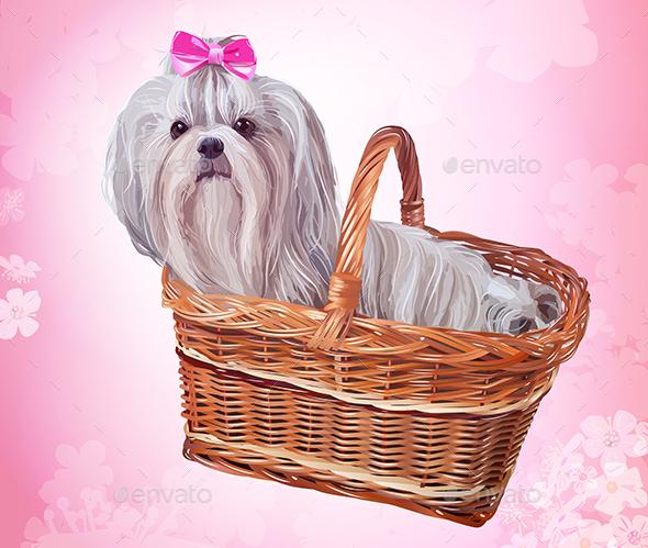 Shih Tzu Dog - Animals Characters