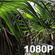 Dwarf Palmettos in Louisiana Bayou - VideoHive Item for Sale