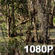 View of the Louisiana Bayou - VideoHive Item for Sale