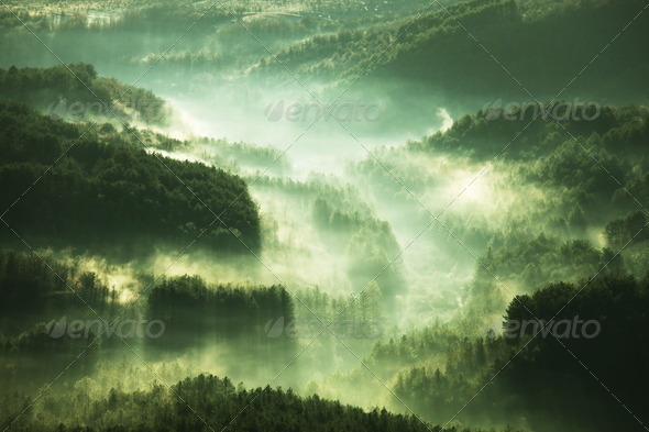 Mist in forest - Stock Photo - Images