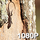 Female Green Anole on a Tree Trunk - VideoHive Item for Sale
