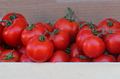 Tomatoes crate - PhotoDune Item for Sale