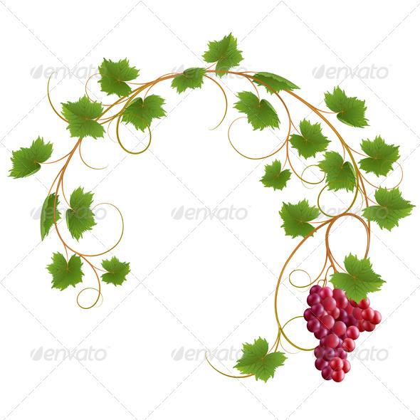 Vine - Flowers & Plants Nature