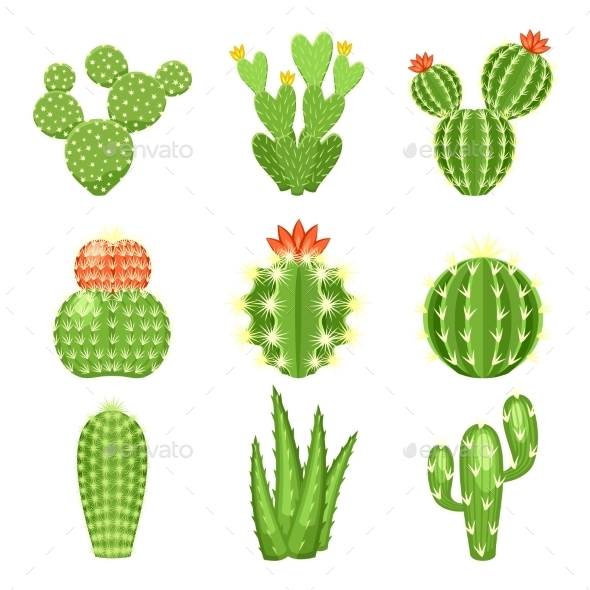 Set of Colored Cactus and Succulents - Flowers & Plants Nature