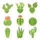 Set of Colored Cactus and Succulents - GraphicRiver Item for Sale
