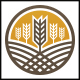 Wheat Logo Template - GraphicRiver Item for Sale