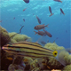 Beautiful Underwater Colorful Corals and Fishes - VideoHive Item for Sale