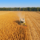 Harvesters Work on Cornfield 5 - VideoHive Item for Sale