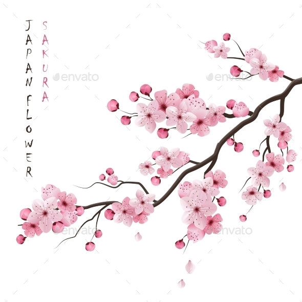 Realistic Sakura Branch - Flowers & Plants Nature