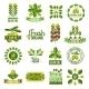 Organic Natural Olive Oil Label Set