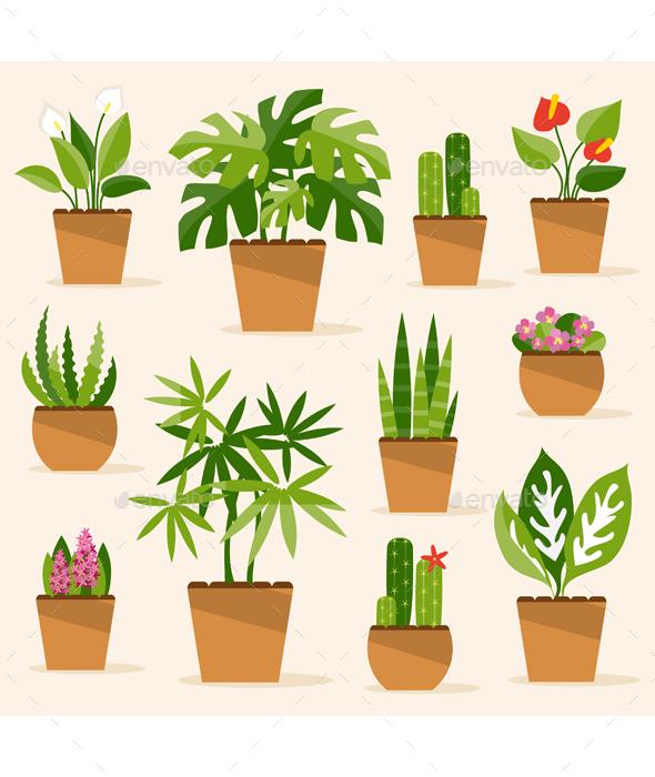 Houseplants - Flowers & Plants Nature