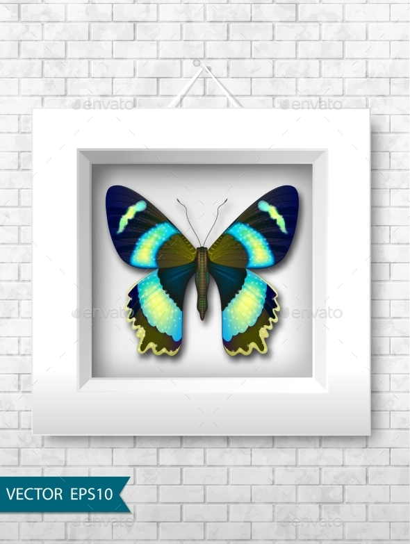 Vector Butterfly In a White Frame On a Brick Wall - Backgrounds Decorative