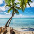Palm beach in Saona island, Dominican Republic - PhotoDune Item for Sale