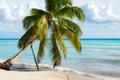Paradise beach in Saona island, Dominican Republic - PhotoDune Item for Sale