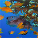 Underwater Colorful Tropical Fish and Porcupine Fish - VideoHive Item for Sale