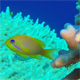 Underwater Colorful Tropical Reef and Coral Crab - VideoHive Item for Sale
