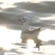 Flock Of Birds On Blue Sky - 10