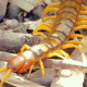 Giant Centipede - VideoHive Item for Sale