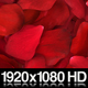 Red Rose Petals Fill Screen Overlay - VideoHive Item for Sale