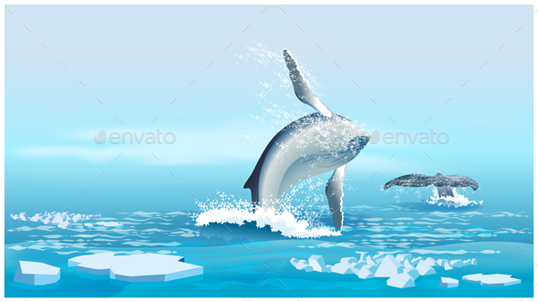 Whales in the Northern Ocean - Animals Characters