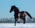 Mustang - PhotoDune Item for Sale