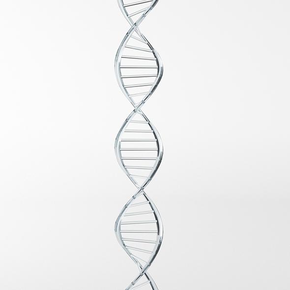 DNA Strand - 3DOcean Item for Sale