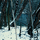 Trees Near the River in Winter - VideoHive Item for Sale