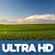Young Cereal Farm Field - VideoHive Item for Sale
