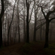 Dark Forest and Ancient Rome Castle 1 - VideoHive Item for Sale