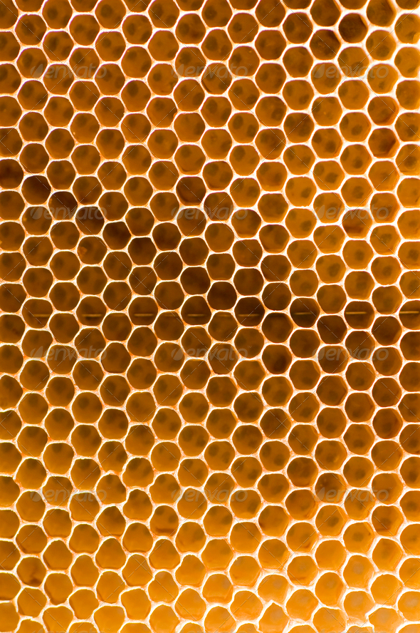 Honeycomb - Stock Photo - Images