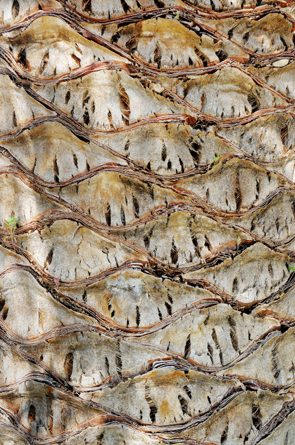 Palm tree bark - Stock Photo - Images