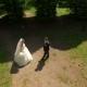 Wedding Bride And Groom Walk - VideoHive Item for Sale