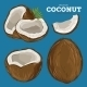 Coconut Isolated - GraphicRiver Item for Sale