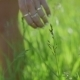 Woman's Hand Caressing Grass  - VideoHive Item for Sale