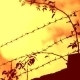 Barbed Wire - VideoHive Item for Sale