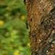 Ants on Tree - VideoHive Item for Sale