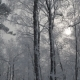 Winter Snowy Forest - VideoHive Item for Sale