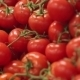 Red Ripe Tomatoes - VideoHive Item for Sale
