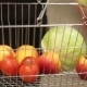 Shopping Cart With Fruit And Vegetables - VideoHive Item for Sale