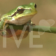 forest frog - VideoHive Item for Sale