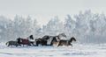 Herd of ponies - PhotoDune Item for Sale