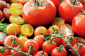 Tomato Varieties on Black - PhotoDune Item for Sale