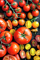 Tomato Varieties on Black Overhead View - PhotoDune Item for Sale