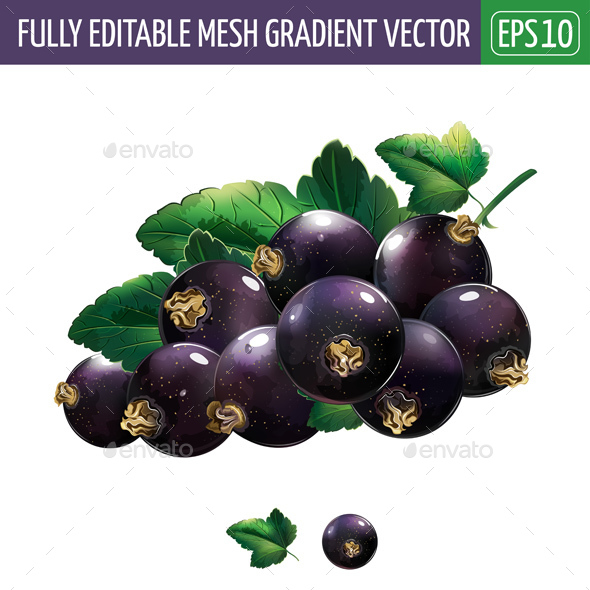 Black Currant With Leaves - Food Objects