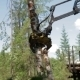 Mechanical Arm Feller Buncher Loads Tree Trunks - VideoHive Item for Sale